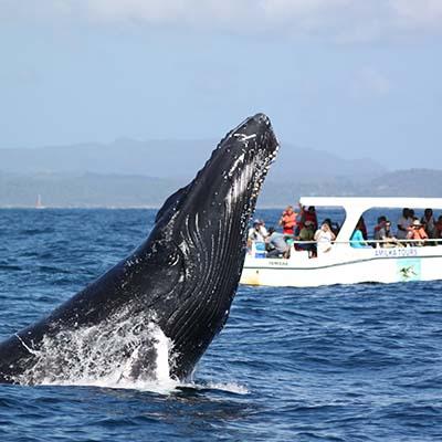 Excursion baleines Samana