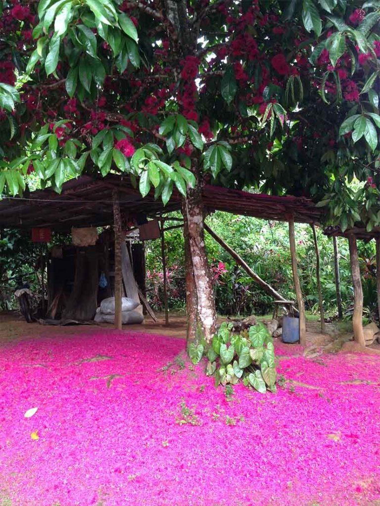 Quad Las Terrenas - Flora Tours